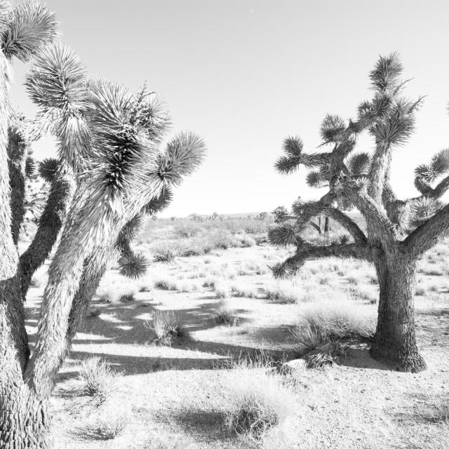 """""""Sunbathing Cactuses"""" stock image"""