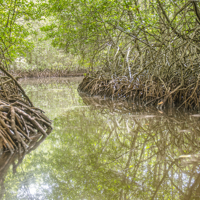 """Mangroves, Nusa Lembongan, Indonesia"" stock image"