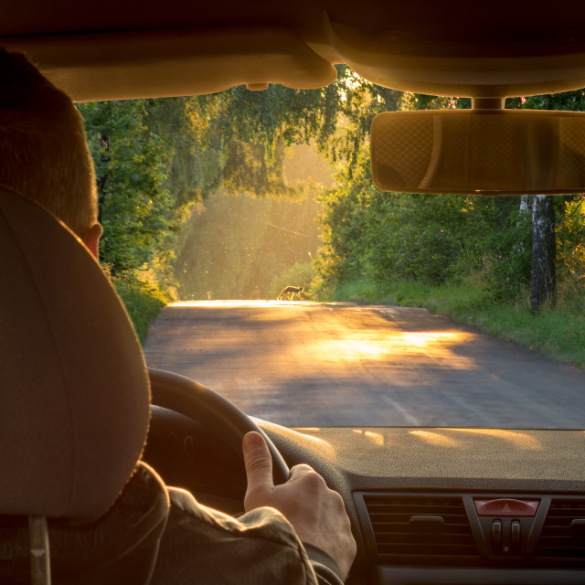 """summer evening behind the steering wheel of the car ,"" stock image"