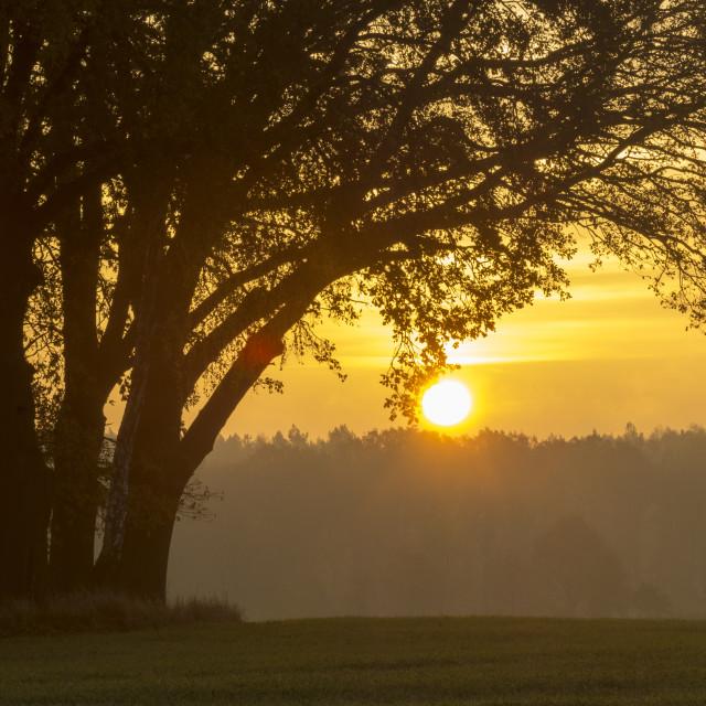 """autumn oaks on a green field"" stock image"