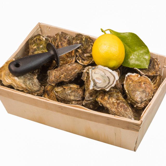 """Raw oysters basket with lemon on white background"" stock image"