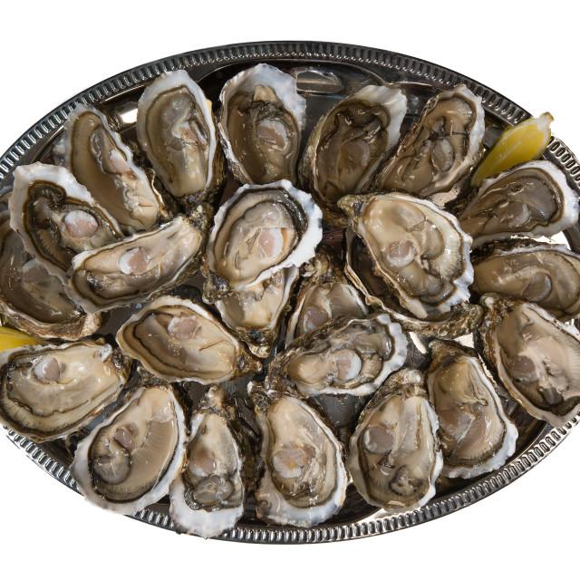 """""""fresh oysters dishing up with lemon on white background"""" stock image"""