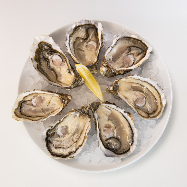 """Oysters in ice and lemon on a white plate"" stock image"