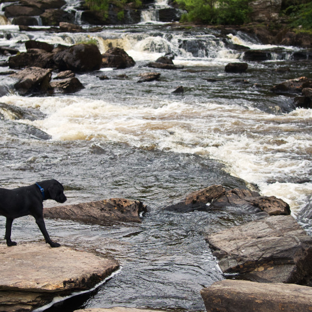 """Dog at Dochart"" stock image"