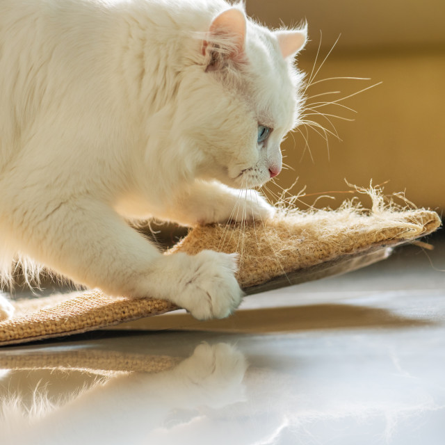 """""""White cat and scratching post."""" stock image"""