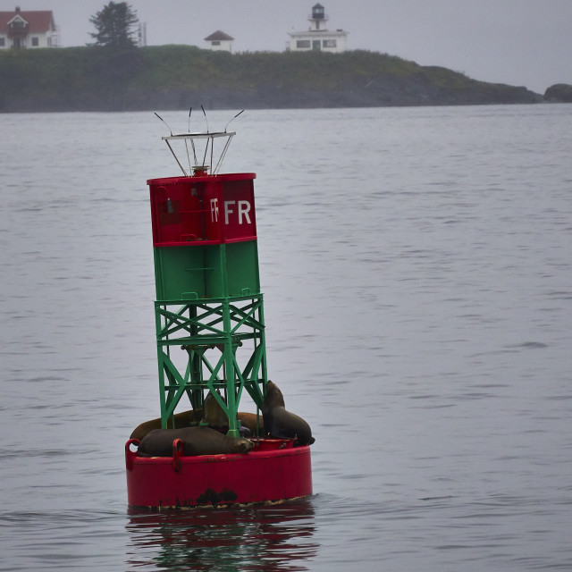 """Sea Lions on a Buoy"" stock image"