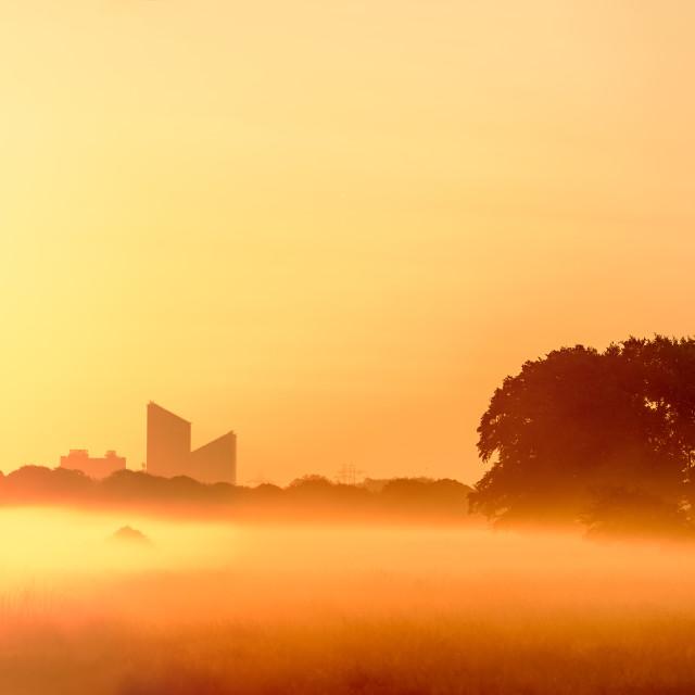 """Misty Golden Sunrise"" stock image"