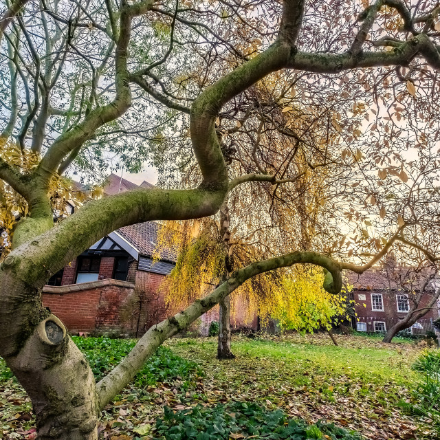 """""""Autumn Churchyard"""" stock image"""