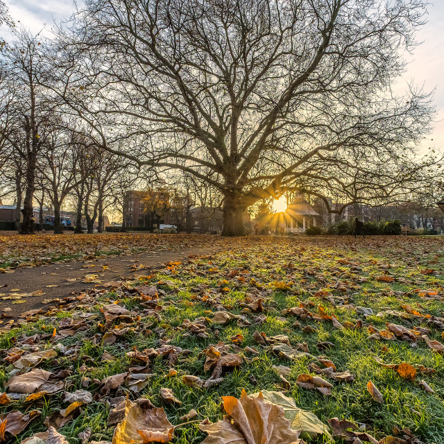 """Norwich park late Autumn"" stock image"