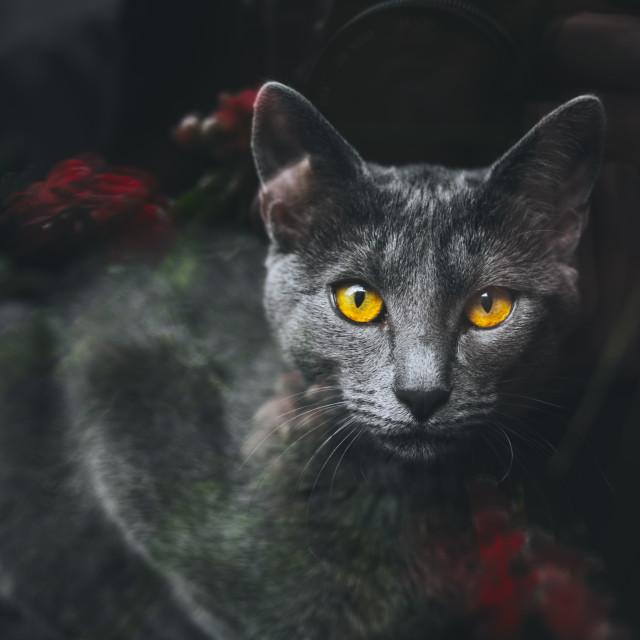 """Yellow eyes"" stock image"