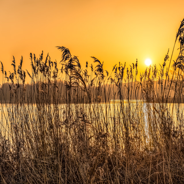 """Whitlingham Broad Sunrise"" stock image"