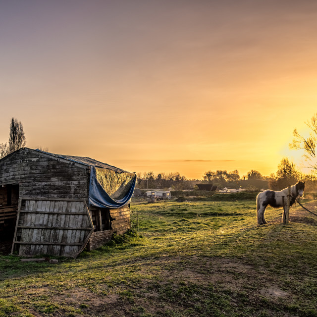"""Pony shed"" stock image"