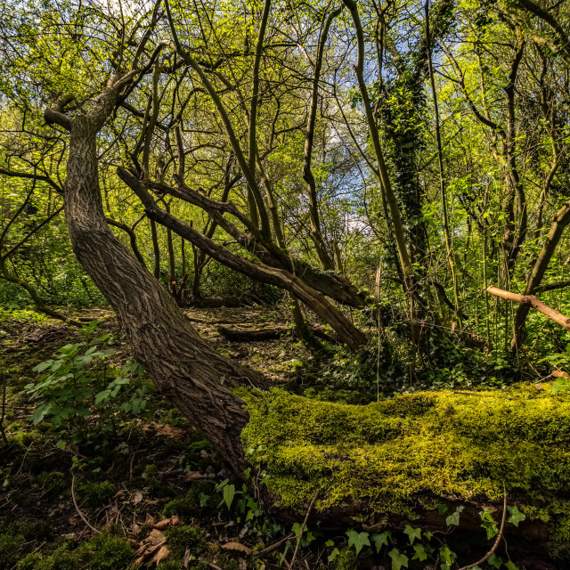 """""""Spring in Train Wood"""" stock image"""