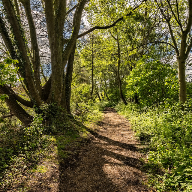 """""""Pathway Through the Wood"""" stock image"""