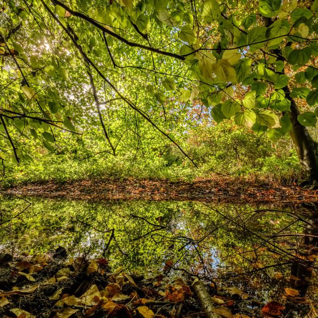 """Autumn Woods UEA"" stock image"