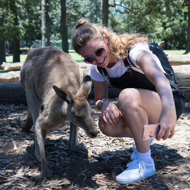 """Selfie with kangaroo"" stock image"