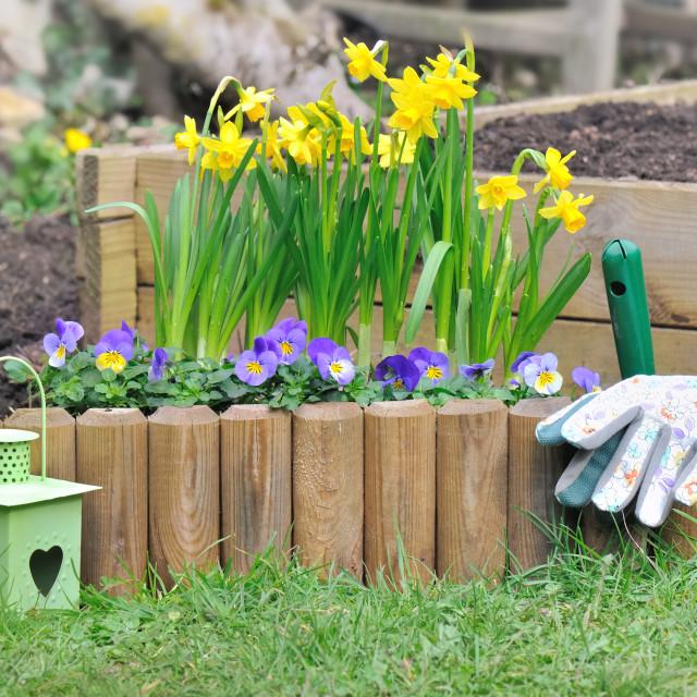 """springtime flower bed in a garden"" stock image"