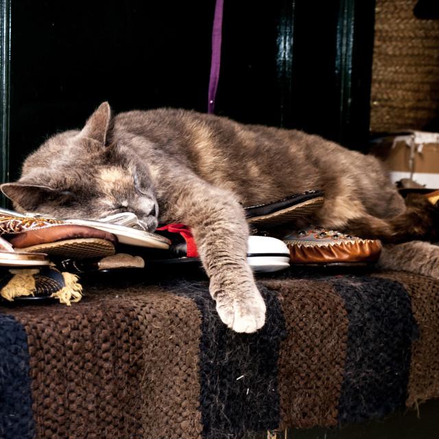 """""""Dubrovnik cat asleep in shop"""" stock image"""