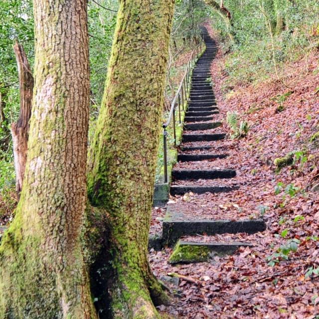 """""""Woodland walk"""" stock image"""