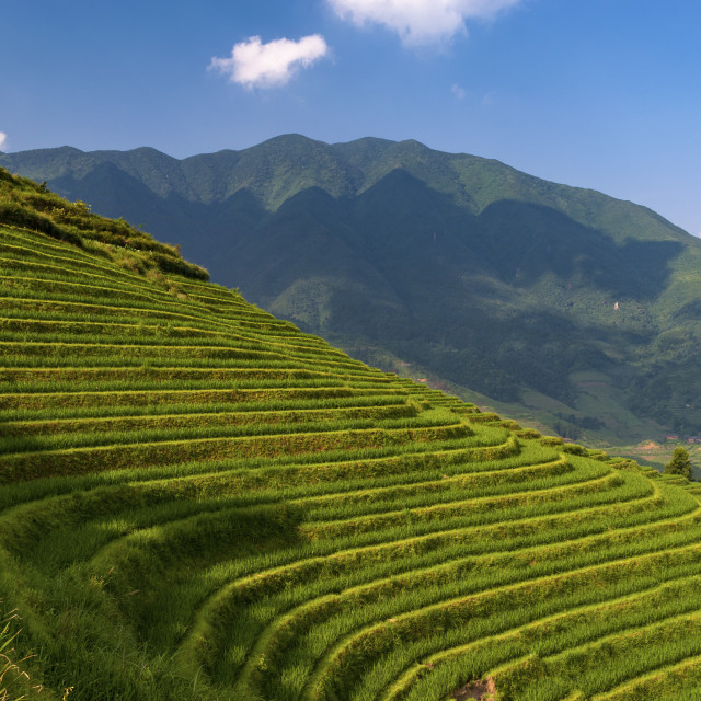 """""""Beautiful view of the Longsheng Rice Terraces near the of the Dazhai village in the province of Guangxi, in China; Concept for travel in China and beutiful and serene landscape"""" stock image"""