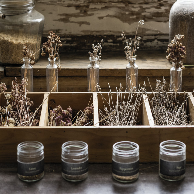 """""""Dried herb and flowers, Canterbury Shaker Village"""" stock image"""