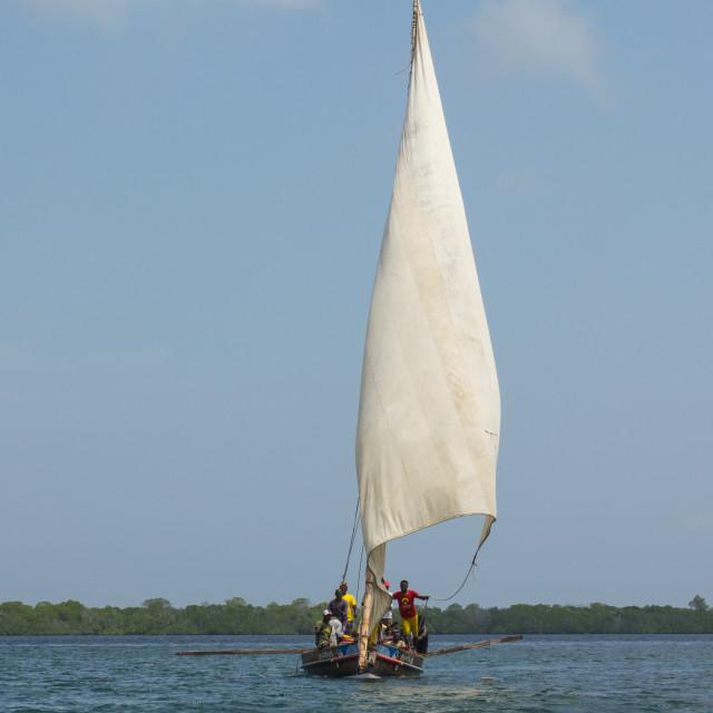 """Dhow sailing in Lamu waters, Lamu Archipelago, Kenya"" stock image"