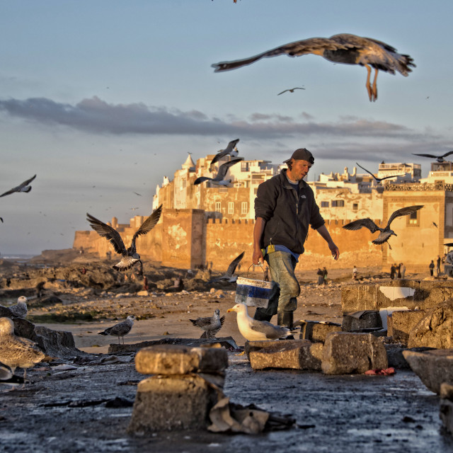 """Fisherman and seagulls at dusk, near Essaouira port, Morocco"" stock image"