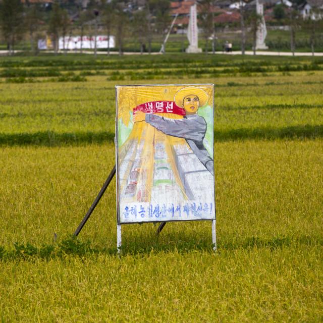 """Propaganda billboard in a rice field depicting a farmer, South Hamgyong..."" stock image"