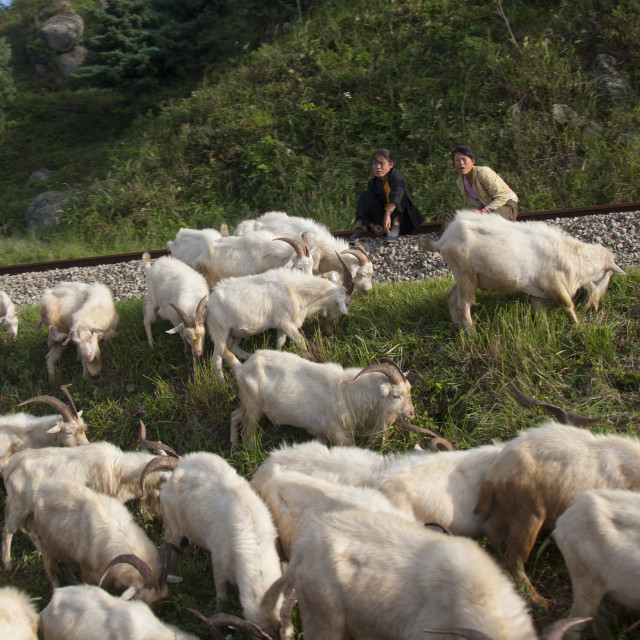 """""""Two North Korean teenage girls watching a herd of goats grazing, North..."""" stock image"""