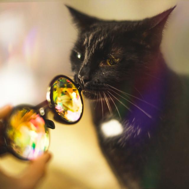 """Fashion Cat?"" stock image"