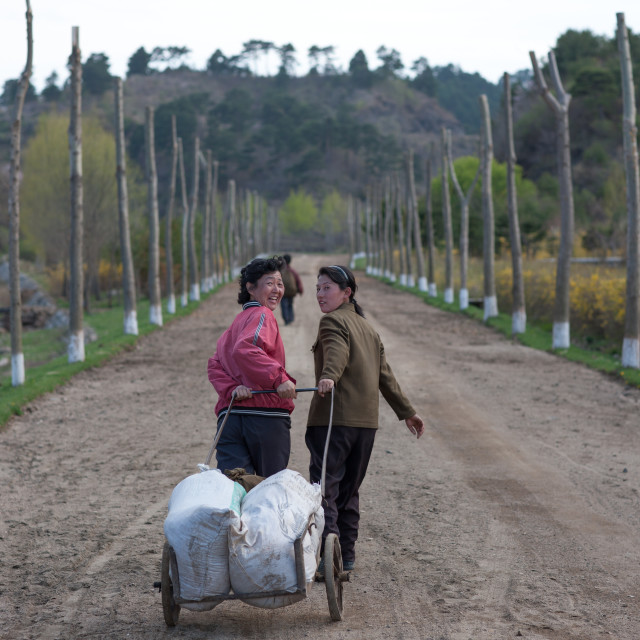 """""""North Korean women pulling a cart in a farm, North Hamgyong Province, Jung..."""" stock image"""