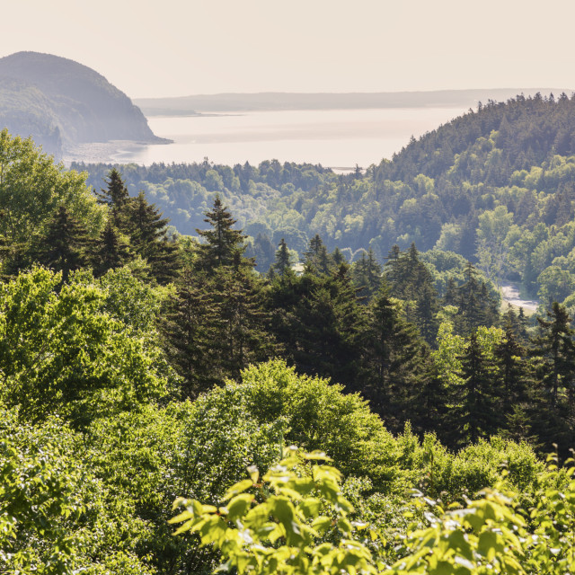 """Panorama of Fundy National Park"" stock image"