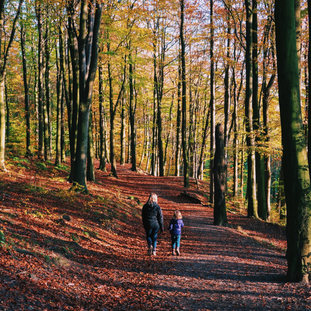 """Walking through autumn woodland"" stock image"