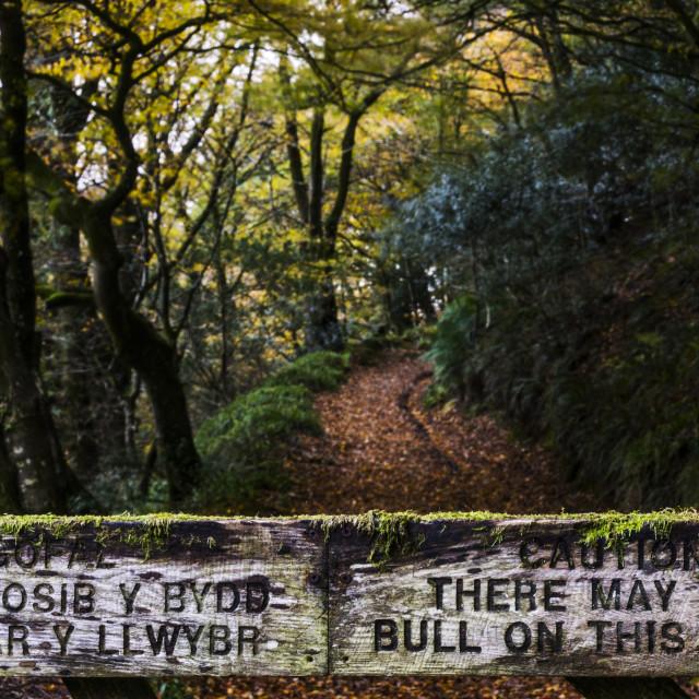 """""""woodland warning"""" stock image"""