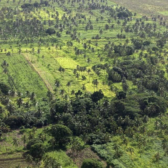 """Rural Tonga"" stock image"
