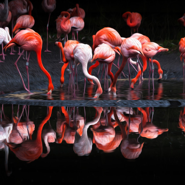 """""""Flamingos using an oil painting filter"""" stock image"""