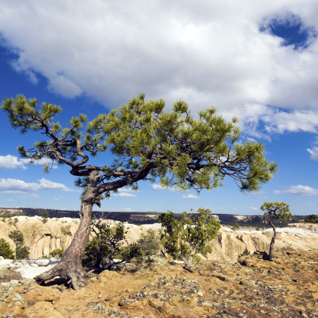 """El Morro National Monument"" stock image"