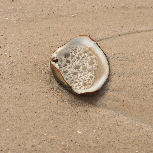 """""""Open clam shell on the beach."""" stock image"""