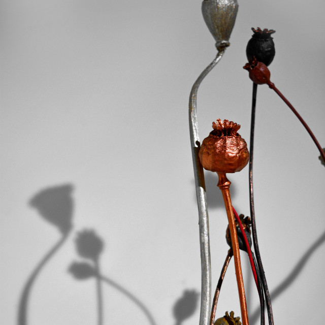 """""""Dried Poppies Still Life"""" stock image"""