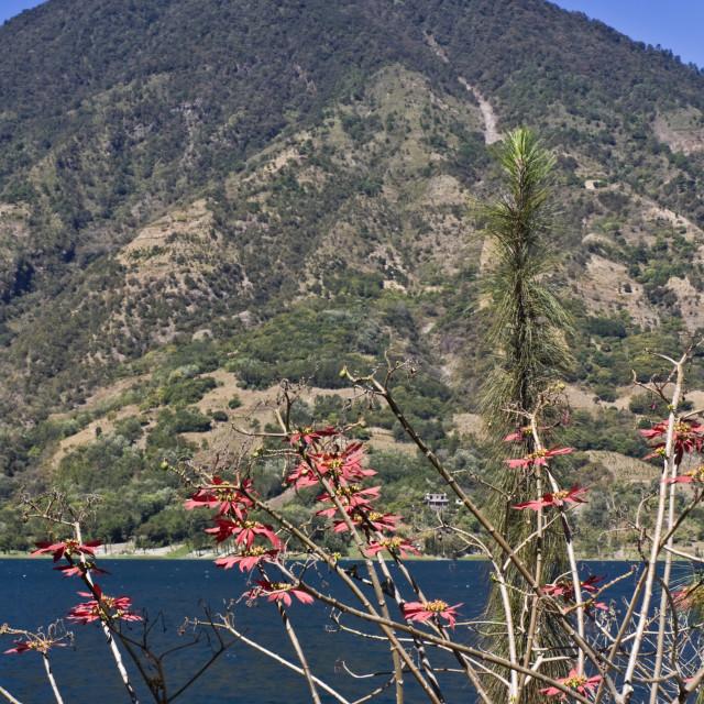 """Volcano by Lake Attilan"" stock image"