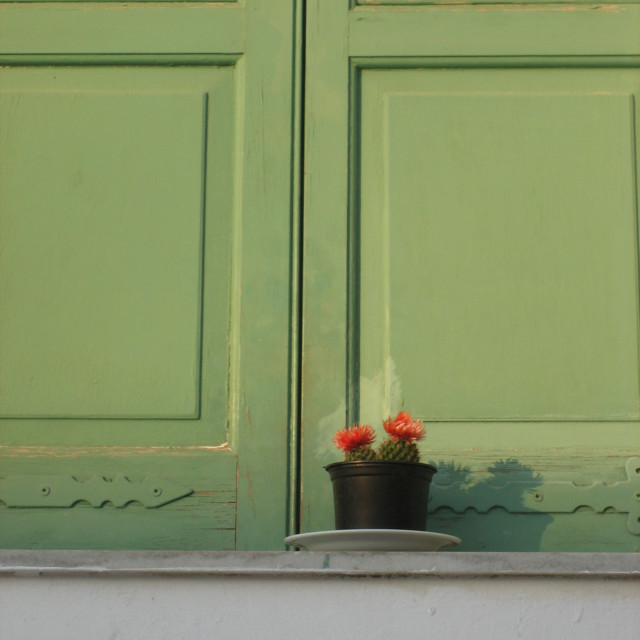 """""""Cactus and green shutters"""" stock image"""