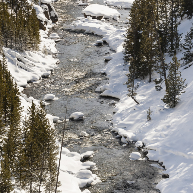 """Yellowstone National Park in winter"" stock image"