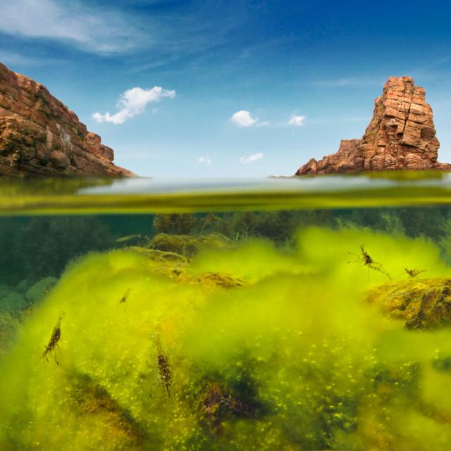 """Split Level Green Algae And Rocks"" stock image"