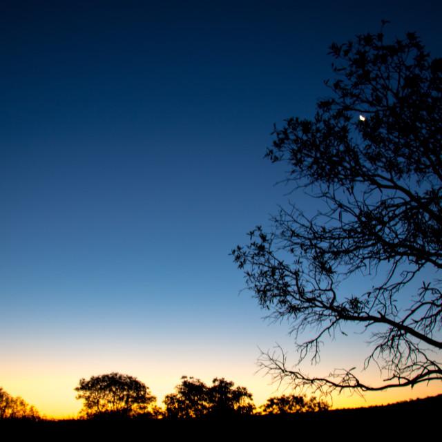 """""""Sunset in the desert"""" stock image"""