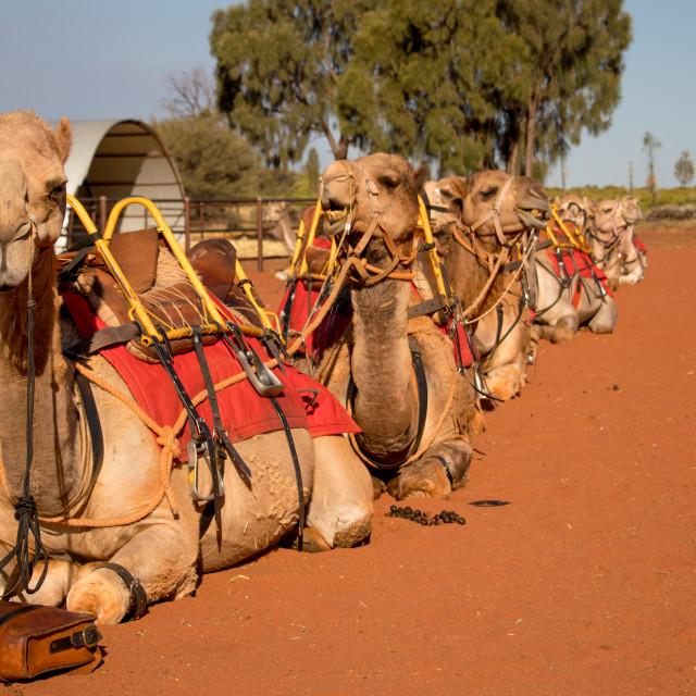 """""""Camel Express"""" stock image"""