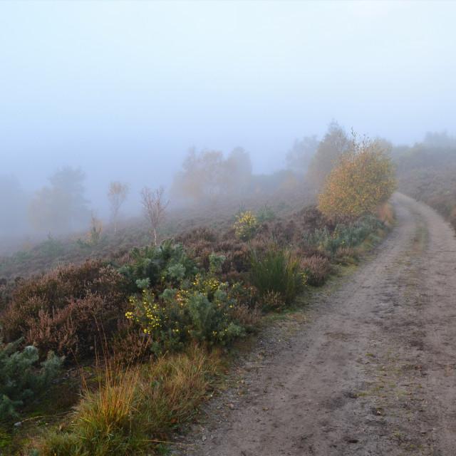 """Misty Path"" stock image"