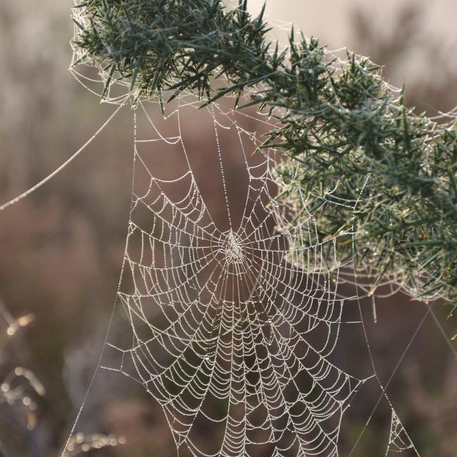 """""""Frosty Web"""" stock image"""