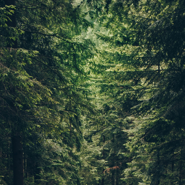 """""""Crop Forest"""" stock image"""
