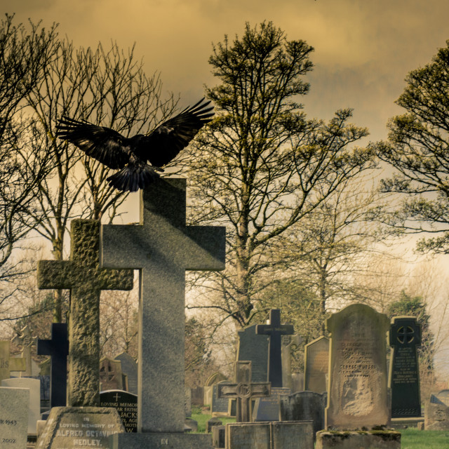 """Crow in a Cemetery"" stock image"