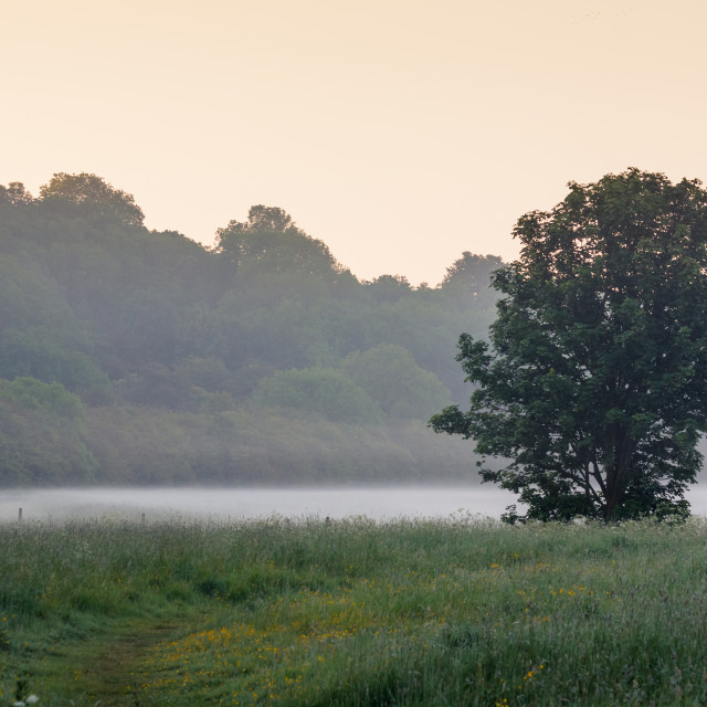 """Mist in the Meadow"" stock image"